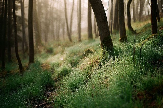 Forest by Marburi