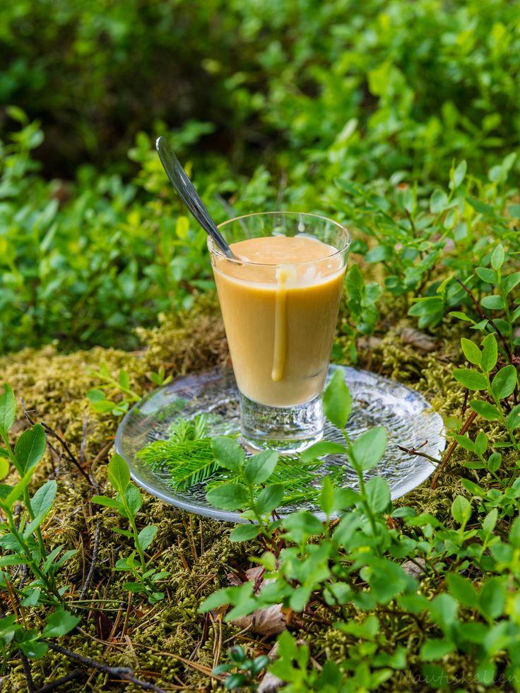 Kuusenkerkkäkinuski, spruce sprout caramel