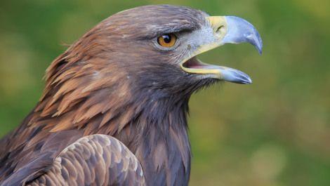 Wind energy company fined $1 million over bird deaths