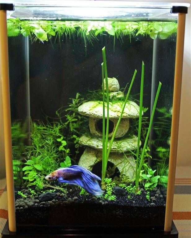 This is closer to where I'm at. I love the Frogbit on the top and glad to know itll look nice in my small Betta Tank.