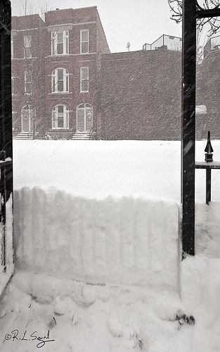 "2011 Chicago Blizzard ~""The weather had cleared this morning, so, thinking the snow had ended I started shoveling . . . first a path from the back door out to the sidewalk. Then another intense snow band crossed the city and dumped 3-4 inches on top of what you see here."" -Bob Segal"