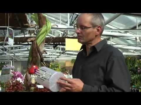 Das Orchitop - Freiheit  für die Orchideen - Wurzel