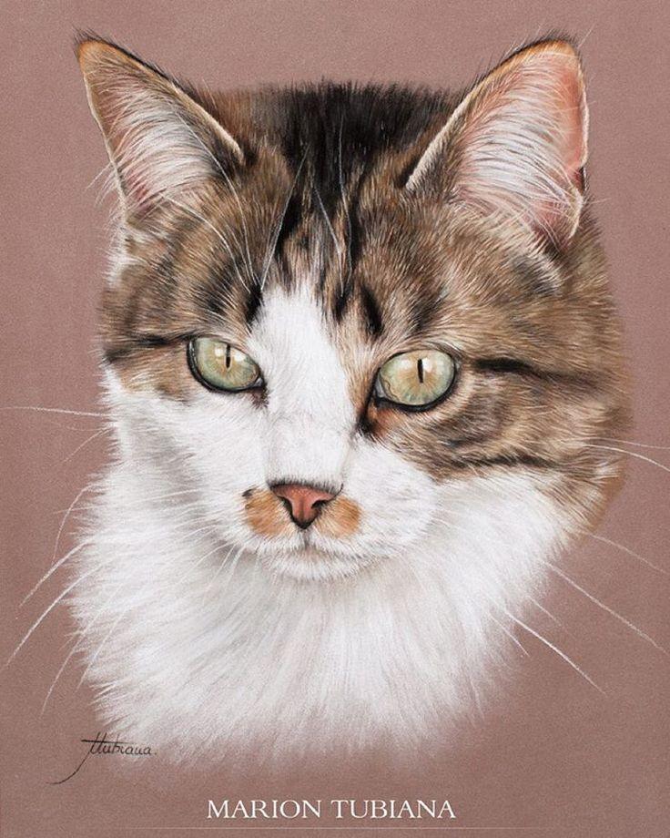 его портрет кошки картинки время как