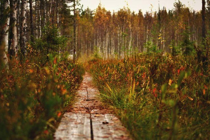 Finland swamp