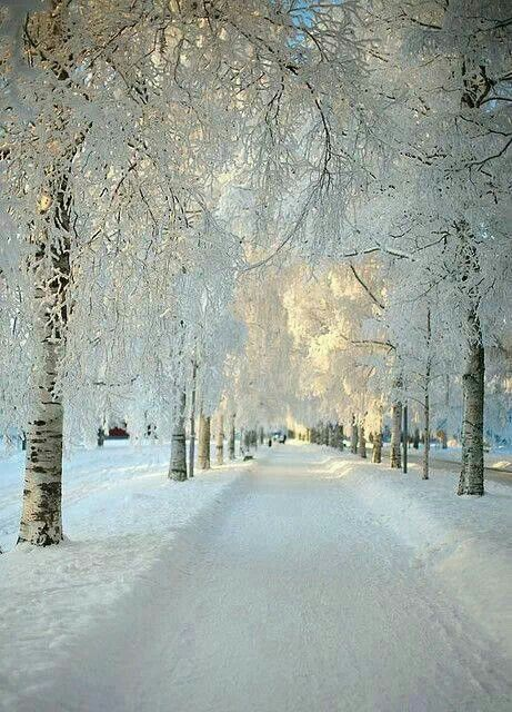 Snowy morning in Sweden