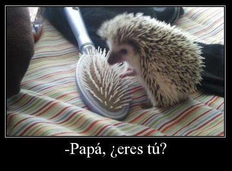 Papa eres tu ✿ Humor / Spanish humor / learning Spanish / Spanish jokes/ Podcast espanol - Repin for later!