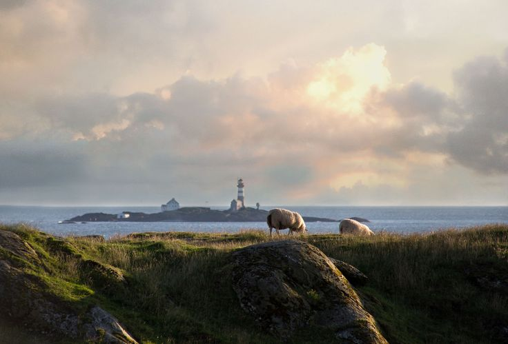 Glowing Sheep by Tor-Arne Paulsen on 500px