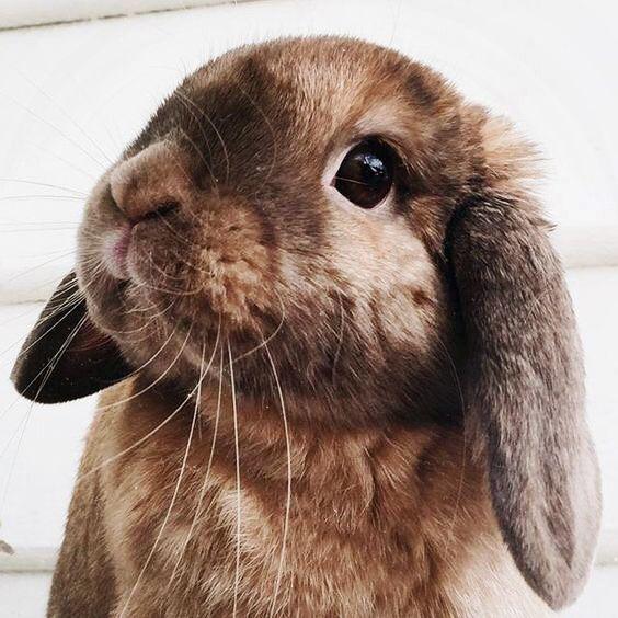Adorable bunny!