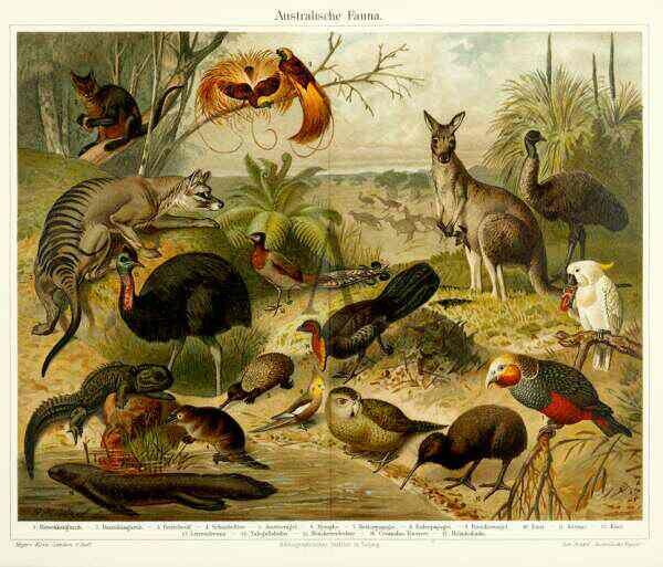 Australian fauna -  Gustav Mutzel, 1895