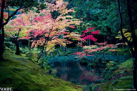 """The visually stuning moss gardens of Koke-Dera in Kyoto, a quiet world of carpets made up of hundreds of varieties of moss on acres of land.    From 'Kyoto', a story on page 234 of Vogue Living July/Aug 2010.    Photographer Nicholas Watt. <a href=""""http://www.japanesegardens.jp/gardens/famous/000001.php"""" rel=""""nofollow"""" target=""""_blank"""">www.japanesegarde...</a>"""