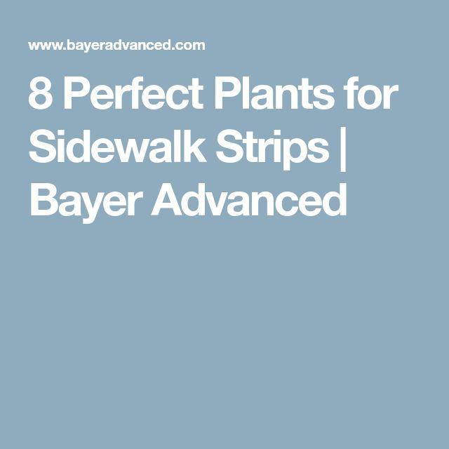 8 Perfect Plants for Sidewalk Strips   Bayer Advanced