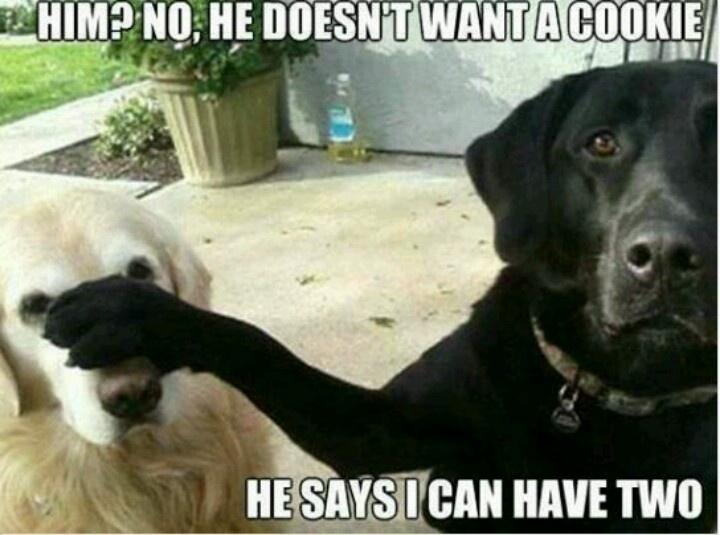 Funny Dog Meme Generator : Best dog jokes images on pinterest funny animals