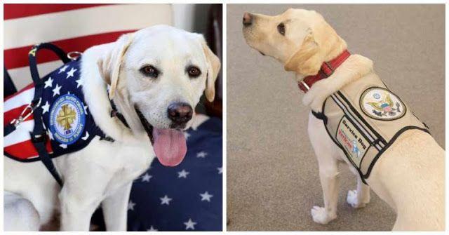 George Hw Bush Service Dog Picture