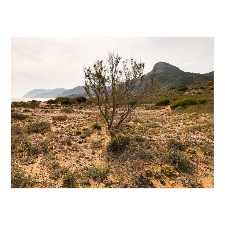 Árbol solitario  Lonesome tree #arbol #tree #arboles #trees #forest #treestagram #mothernature #treescape #weather #landscapestyles #landscape_lover #skylovers #day #naturediversity #landscapes #naturephoto #naturewalk #naturelove #nature_prefection #naturegram #landscapelovers #leaves #naturelover #landscapehunter #imarchi #fotografomadrid Originally posted in Instagram http://ift.tt/2t3aYI0 on June 09 2017 at 06:57PM Árbol solitario  Lonesome tree arbol tree arboles trees forest…