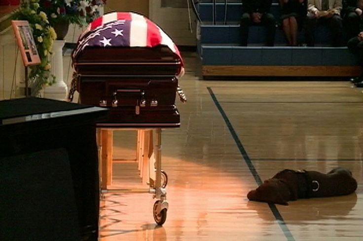 """Slain Navy SEAL Jon Tumilson's dog """"Hawkeye"""" lies next to his casket during funeral services in Rockford, Iowa. Tumilson was one of 30 American soldiers killed in Afghanistan on August 6 when their helicopter was shot down during a mission to help fellow troops who had come under fire.    ."""