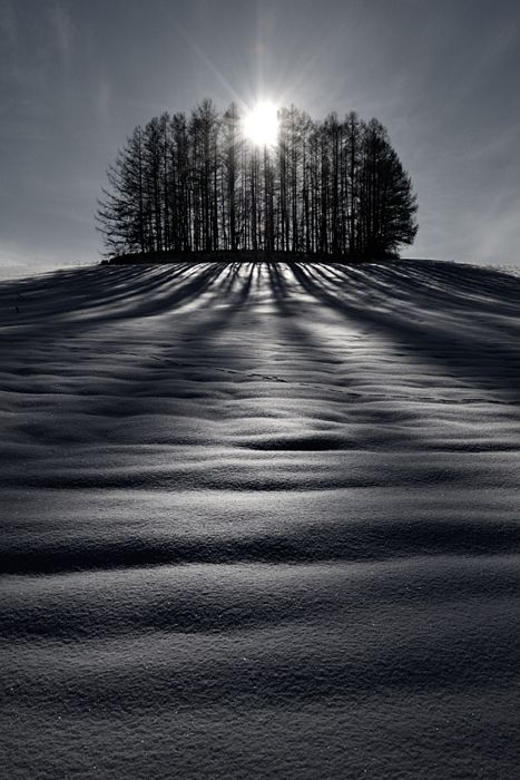 A wonderful winter scene - The sun and shadows, Biei, Hokkaido, Japan