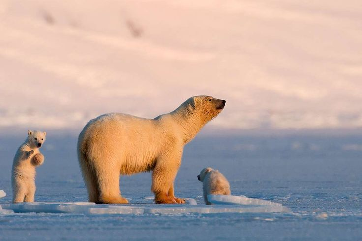 The stunning arctic scenery and wildlife of Spitsbergen make it the crown of Arctic Norway.