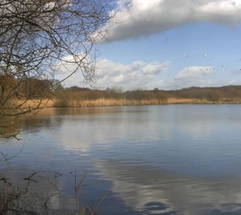 Cheshire Wildlife Trust looks after Knutsford Moor