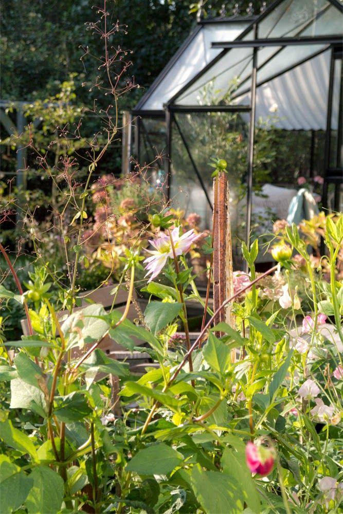 My loving home and garden: Jeg har set solen - og det smukke efterår