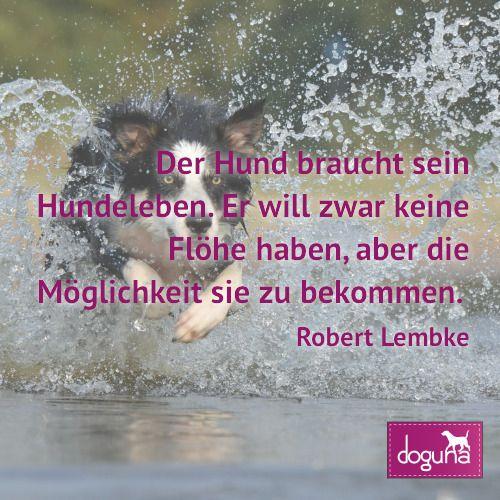 Der Hund braucht sein Hundeleben. Er will zwar keine Flöhe haben aber die Möglichkeit sie zu bekommen. (Robert Lembke) #hund #hunde #dog #dogs #dogsofinstagram #love #beautiful #instadog #ilovemydog #doglover #dogoftheday #doggy #dogstagram #hamburg #germany #deutschland #weisheiten #lovedogs #doglove #zitate #fb
