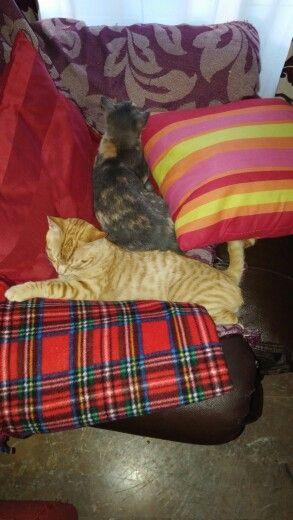 Mi sofa, perdon su sofa
