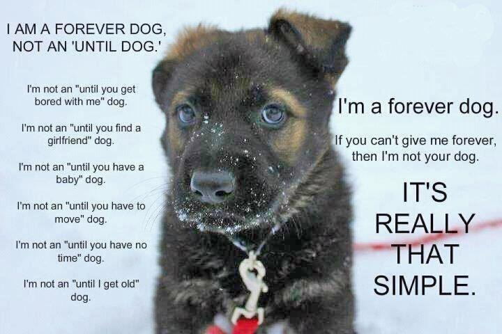 really it is that simple   Dogs Dog quotes Animals