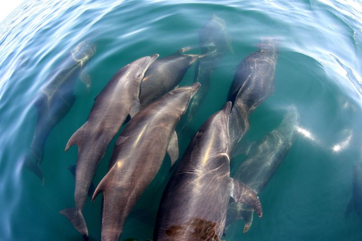 Swimming with dolphins in the wild is just one of 7 awesome natural wonders in Puerto Escondido #Mexico #PuertoEscondido