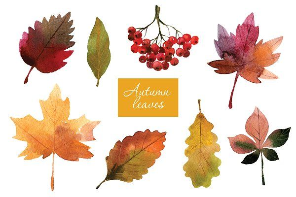 Watercolor autumn leaves - Illustrations
