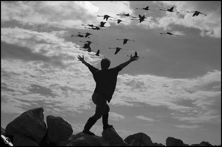"""""""Μικραίνουν οι μέρες μικραίνουν για να στενοχωριούνται συντομότερες.Σημάδι για να φύγετε πουλιά..Δεν σας ακολουθώ..Να μην ξεχάσω πουλιά,τότε,σ΄εκείνο το πλωτό μαντρί του Νώε...ανάμεσα σε όλα τα προς διάσωση και αναπαραγωγή ήταν κι η ουτοπία.Μάλιστα η μόνη που ταξίδεψε πρώτη θέση και παράθυρο. Αχ φυγή ωχ ουτοπία"""" Κ.Δημουλά"""