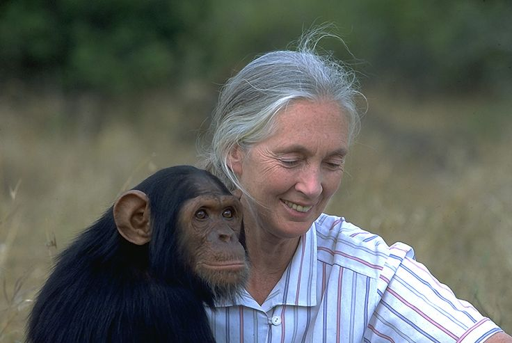 Jane Goodall ~ Goodall is best known for her 45-year study of social and family interactions of wild chimpanzees in Gombe Stream National Park, Tanzania.  She is the founder of the Jane Goodall Institute and has worked extensively on conservation and animal welfare issues.