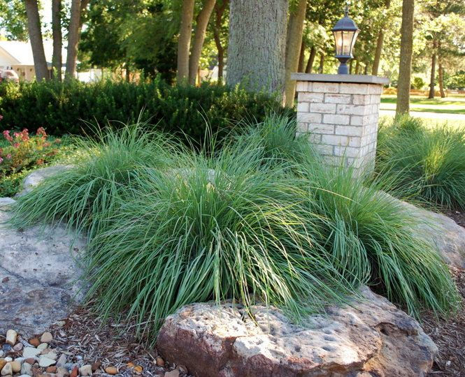 79 best rock garden ideas images on pinterest for Large grasses for gardens