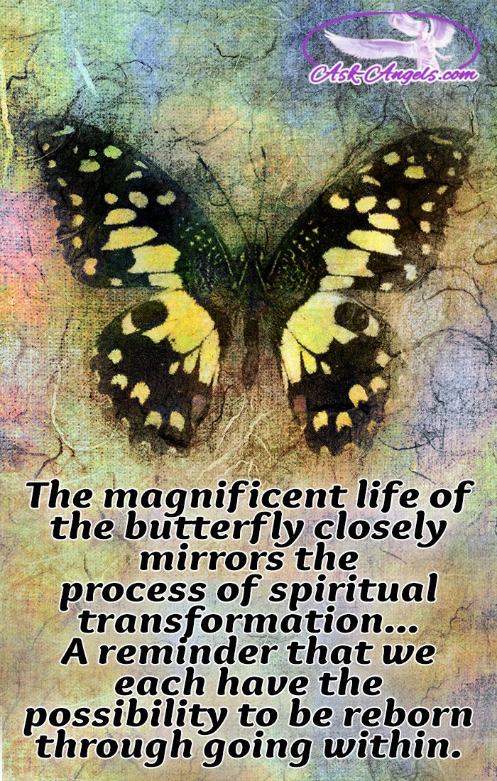 The magnificent life of the butterfly closely mirrors the process of spiritual transformation as we each have the possibility to be reborn through going within.