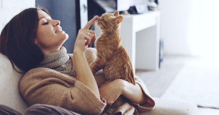 Les 192 meilleures images propos de chats milieu de vie et comportement sur pinterest - Chat qui dort sur son maitre ...