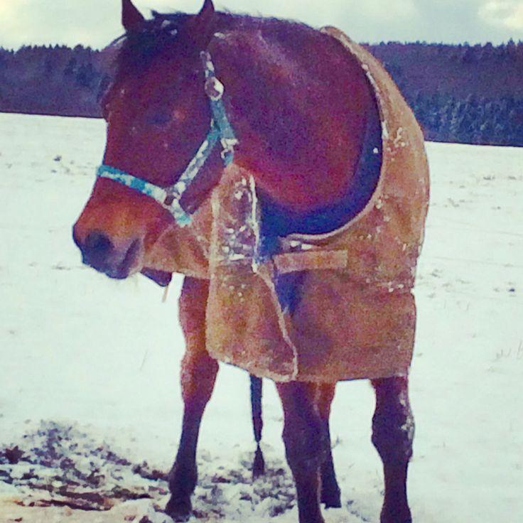Winter16