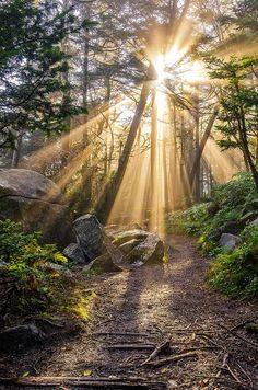 and the forest dreams eternally......., sublim-ature: Roan Mountain Light by Anthony...