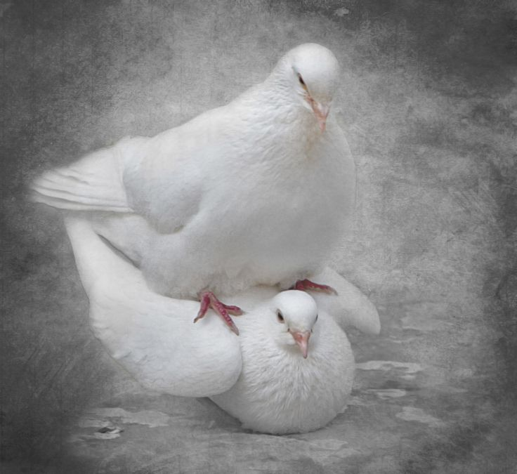 Photograph Love Is by Linda Bullock on 500px