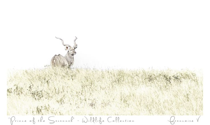 """Prince of the Savanah"" {Wildlife Collection} by Francoise V"