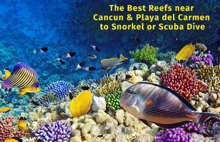 The Best Reefs near Cancun & Playa del Carmen to Snorkel or Scuba Dive  #yachtrental #yachtrentalplayadelcarmen #snorkel #scubadive #dive #cancun #bestreefcancun #yachtcharterscancun #yachtcharters