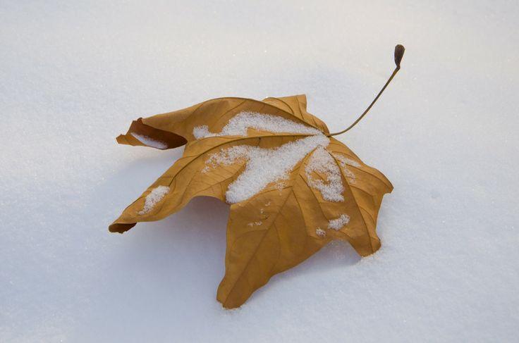 Photo Leaf by Tarik  Jesenkovi? on 500px