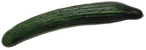 growing Burpless cucumbers