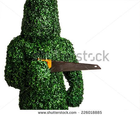 Live bush pose holding old hand saw, isolated on a white background. Studio photo. - stock photo