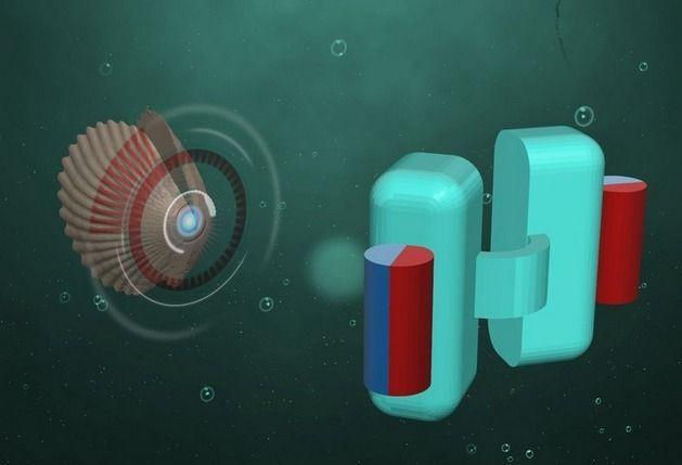 Des microrobots qui voyagent dans notre corps pour le soigner / En s'inspirant du pétoncle, les chercheurs de l'institut Max Planck de Stuttgart en Allemagne ont conçu un microrobot de quelques centaines de microns qui peut nager dans les fluides corporels. Dans un avenir pas très lointain, cet engin pourrait être injecté dans le corps pour diffuser des traitements médicaux. © Max Planck Institute /  Futura Matière