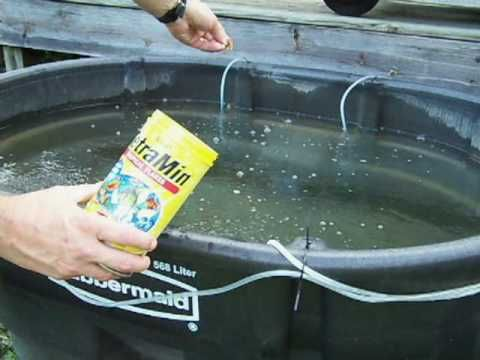 How to set up a holding tank for accumulating live bait fish.