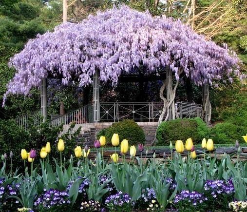 Wisteria gazebo with a tulip path. What a peaceful sanctuary! Enjoy RUSHWORLD boards, GARDENS THAT MAKE YOU SWOON, ART A QUIRKY SPOT TO FIND YOURSELF and EYE CANDY ARCHITECTURAL MASTERPIECES. Follow RUSHWORLD on Pinterest! New content daily, always something you'll love!