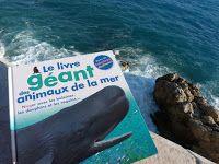 Amoureux des fonds marins, voici le livre géant des animaux de la mer de Gallimard Jeunesse. Il présente les 5 créatures les plus extraordinaires qui peuplent le monde sous-marin à savoir : le dauphin, la méduse à crinière de lion, le requin, le morse, le cachalot, le calamar géant, le requin éléphant.