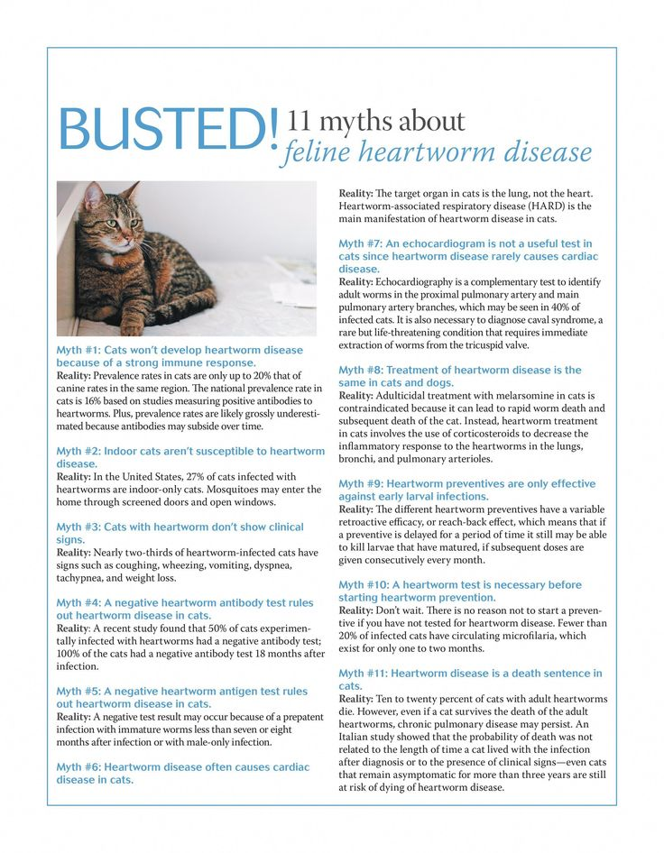 Can Cats Get Colds CatsOutOfTheBag Heartworm disease