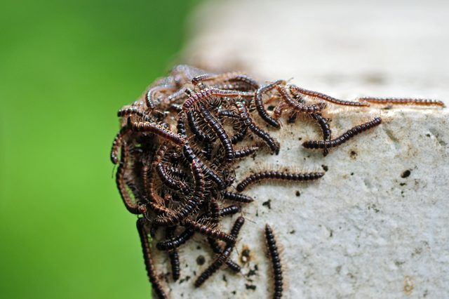 How to Get Rid of Millipedes