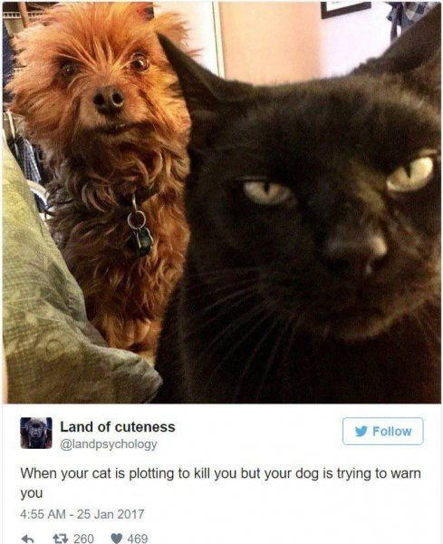 19+LOL CAT MEMES/PIC TO MAKE YOU BEND OVER LAUGHING