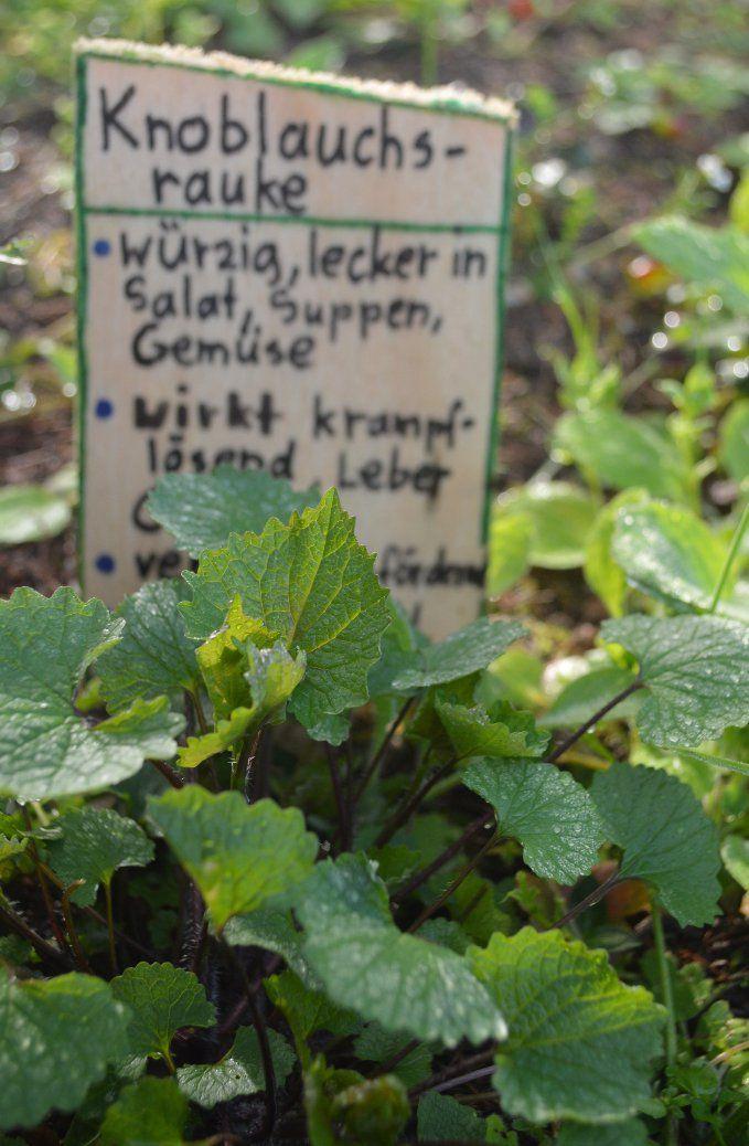 Zeit für Wildkräuter - finde Deine grünen Begleiter*innen