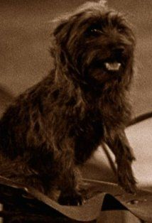Terry... dog actress... who played Toto in the movie The Wizard of Oz (1939)
